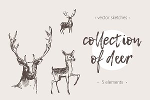Hand drawn collection of deer