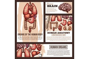 Anatomy of human organs sketch banner template
