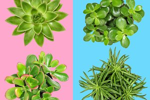 Succulent plants Flat lay