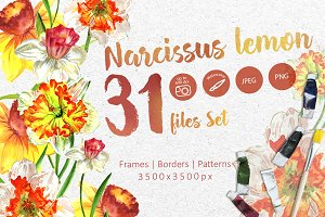 Narcissus lemon PNG watercolor set