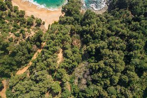 Aerial views of a forest of pine tre