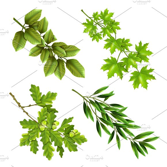 Green Branches Of Deciduous Trees