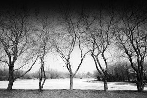 5 dramatic black and white trees landscape background