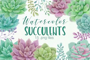Watercolor Succulent Illustrations