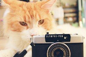 Cute cat and film camera