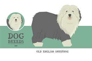 Dog breeds Old English Sheepdog