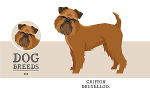 Dog breeds Griffon Bruxellois