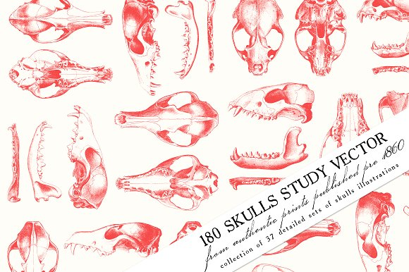180 Skulls Study Vector