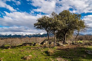 Landscape with holm oak in mountain range