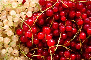 Background of red and white currant berries. Top view, copy space. Vegan and vegetarian concept. Summer healthy food. Macro of berries