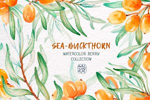 Sea-buckthorn, watercolor collection