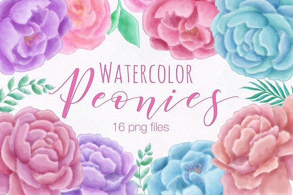 Peony Flower Watercolor Illustration