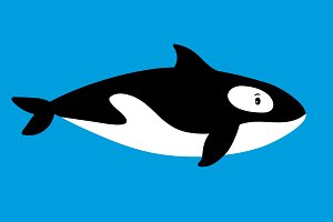 Killer whale sea animal icon