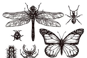 Hand drawn different insects set