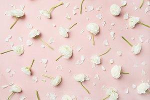Flat-lay of white ranunculus flowers