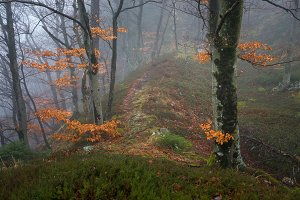 Mystic spring forest