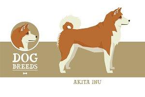Dog breeds Akita Inu