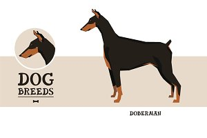 Dog breeds Doberman
