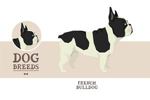 Dog breeds French Bulldog