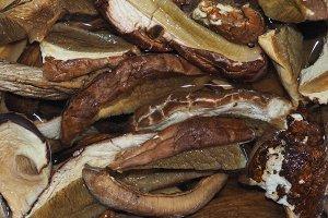 porcini (boletus edulis) mushroom food