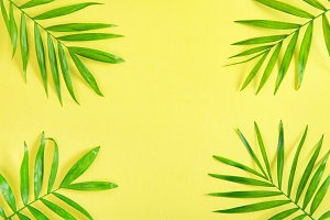 Palm leaves Summer background
