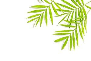 Palm leaves white background JPG