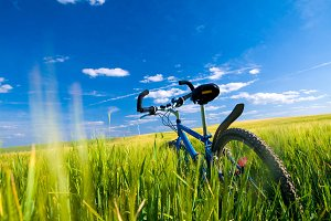 Bike on the filed