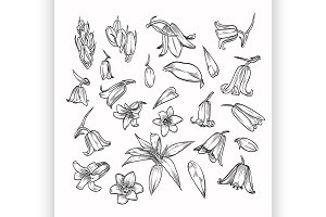 Vector hand drawn elegant bluebells