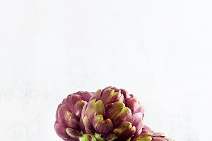 Fresh bunch of purple artichokes on