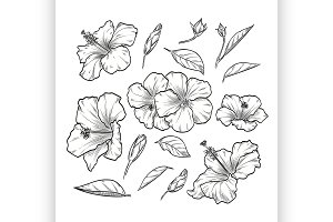 Vector hand drawn elegant hibiscus