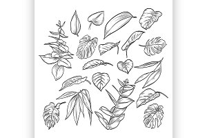 Vector hand drawn elegant leaves