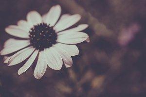 blur flower
