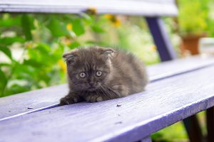 the kitten is lying on the bench in