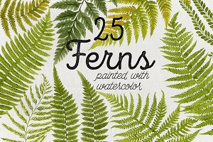 25 Watercolor Ferns