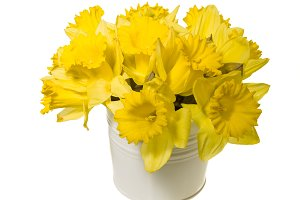 Daffodil bouquet in white can