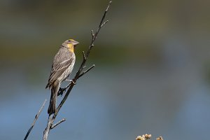 Bird perched on Twig