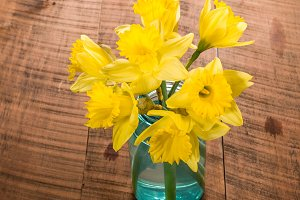 Daffodil flowers in blue vase