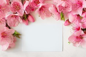 Pink spring background fresh flower on white background.