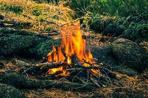 Tourist bonfire in wild forest