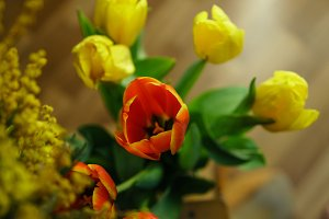 Bouquet of tulips and mimosa closeup
