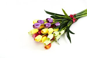 Festival Backgrounds ,Fake colorful tulips on white background with copy space