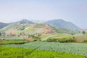 Acreage farm in the mountains.