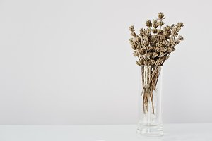 Dried lavender branches