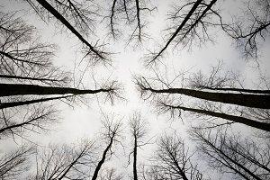 Trees in Sky