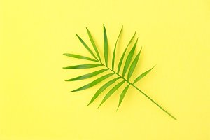 Palm leaf yellow background