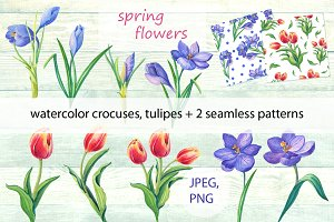 Spring flowers.Watercolor.