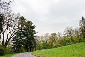 Road through landscape