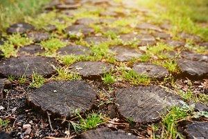 Stump path background