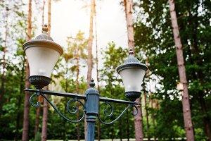 Lantern at pine wood
