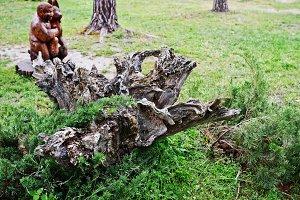 Decorative tree stump and root